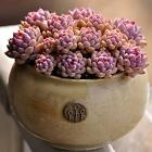 Fun 60PCS Seeds Mixed Succulents Seeds Rare Succulent Potted Plant Home Decor SP