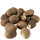 Whole Tagua Nuts Carving Dried Uncut from Ecuador Fair Trade