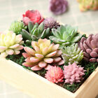 Home Garden - Artificial Succulents Plant Garden Miniature Fake Cactus DIY Home Decor 5-11cm