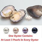 Akoya Oysters With Round Pearl Inside At Least 3 Pearls In Every Oyster 6-8mm