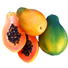 MELON TREE STRAWBERRY Carica PAPAYA 10, 50, 100, 500 or 1000 seeds