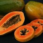 MELON TREE Florida Red Royal  Carica PAPAYA 10, 50, 100, 500 or 1000 seeds