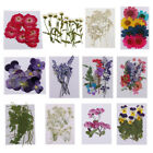 Внешний вид - Variety of Real Pressed Dried Flowers for DIY Scrapbooking Art Crafts Decoration