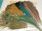 Peacock  quills GREEN GOLD  Feathers, eyes, swords, herl, blue body