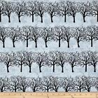 Winter Moons Fabric by Two Can Art Winter Tree Light Blue Premium Cotton Andover