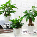 Double Layers Office Flowerpot Self Watering Transparent ABS Planter Container