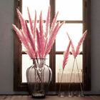 15pcs Bunch Bunny Tails Lagurus Pampas Grass Dried Flower Wedding Home Decor New