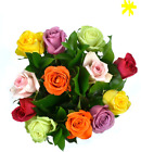 Best Valentine's Day Rainbow Roses with Premium Greens, Two Dozen, Vase Included