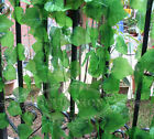 7.87ft Artificial Grape Leaf ivy garland Plant Foliage Home Party Decorate