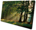 Landscapes Forest SINGLE CANVAS WALL ART Picture Print VA