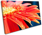 Gerbera Flowers Floral SINGLE CANVAS WALL ART Picture Print VA
