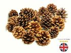 Natural Pine Cones Approx 60 Per kg Quality Pinecone's Florists Crafts Cone