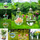 Home Garden Decor Pot Hanging Mount Bubble Aquarium Plants Fish Tank Aquarium