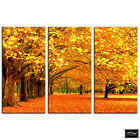 Autumn Trees   Landscapes BOX FRAMED CANVAS ART Picture HDR 280gsm