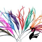 Feather Spiky Biot Bunch - Craft Millinery Fly Fishing