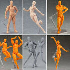 Ferrite Action Figure Play Arts Kai Anime Model Drawing Figma Kids Toy Hot