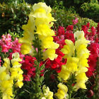 Seeds Orchid Various Exotic Hydrangea Flowers Rare Ideal Garden Potted
