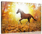 LARGE BROWN HORSE FOREST Canvas Print Pictures Wall Art Canvas Prints Unframed
