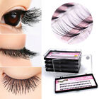 6/8/10/12/14mm Curl Individual Cluster Long False Eyelash Lashes Extension Tray