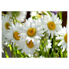 DIY 5D Diamond Painting Embroidery Cross Stitch Kit Decor Daisy White Fashion