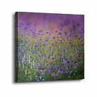 ArtWall Colette Baumback 'The Purple Meadow' Gallery-wrapped
