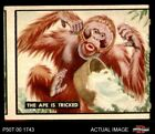 1950 Topps Bring Em Back Alive #57 The Ape Is Tricked GOOD