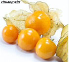 200pcs Physalis Peruviana Seed Delicious Fruit Golden Berry Chinese Latern Plant