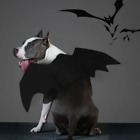 New Animal Pet Dog Cat Bat Vampire Halloween Fancy Dress Costume Outfit Wings