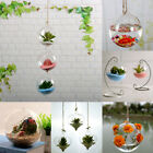 Clear Ball Flower Hanging Vase Planter Terrarium Container Glass Home Decor Us