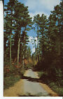 OLD POST CARD OF A  ROAD IN A RED PINE FOREST OF NORTHERN MINNESOTA