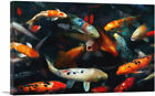 ARTCANVAS Koi Carp Fish China Asia Japan in Pond Canvas Art Print